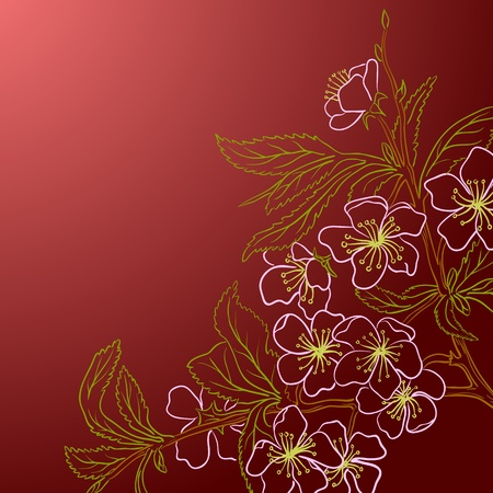 cherry tree: Vector illustration with cherry blossom for greeting card.