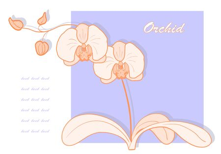 Vector illustration with orchid for greeting card. Vector
