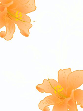 orange lily: Vector illustration with lilies for greeting card.