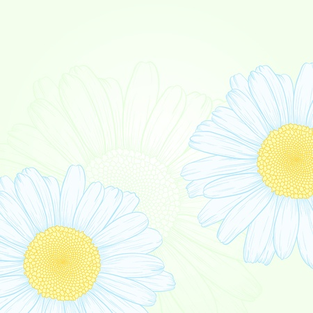 blue daisy: Vector illustration with daisies for greeting card. Illustration