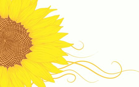 Vector illustration with sunflower for greeting card. Vector