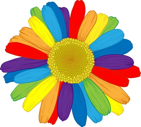 Vector colored daisy with rainbows petals on white. Ilustracja