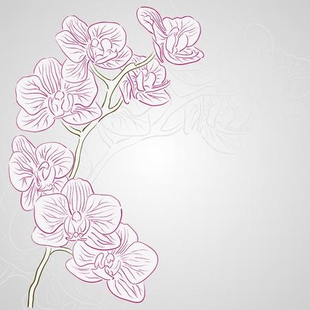 Wektor pozdrowienia karta wakacje z orchidei kwiatów Ilustracja