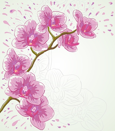 Vector greetings card for holiday with orchid flowers  Vector