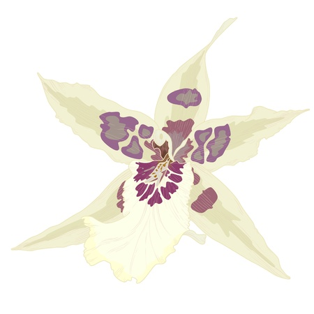 Vector illustration with orchid flowers, eps 10 with transparency effects  Vector