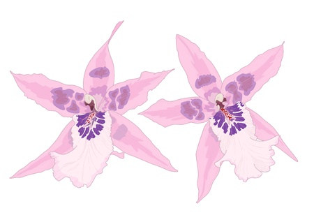 Vector illustration with orchid flowers, eps10 with transparency effects  Vector