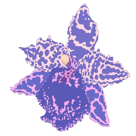 Vector illustration with orchid flower  Vector