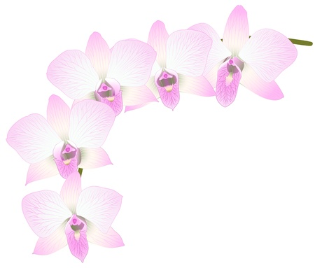 Vector illustration with orchid flowers for greeting card  Vector