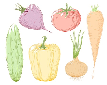 illustration vegetables in color. Vector