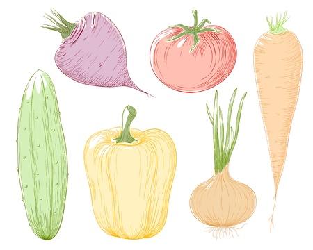 greengrocer: las verduras ilustraci�n en color.