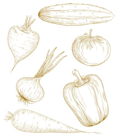 greengrocer:  illustration vegetables in vintage engraving style. Illustration