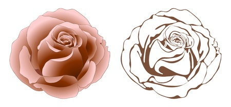vintage roses: Vector illustration with roses in vintage style. Illustration