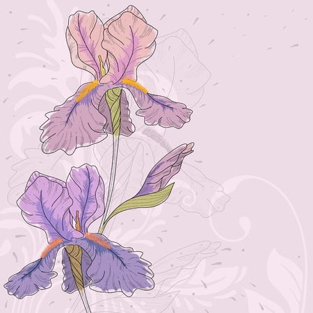 Hand drawn iris with fantasy flowers and plants.  Vector