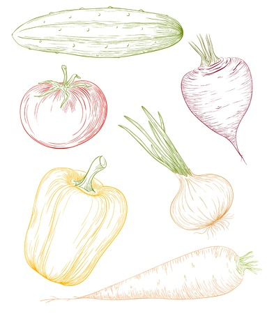 Vector illustration vegetables in vintage engraving style. Vector