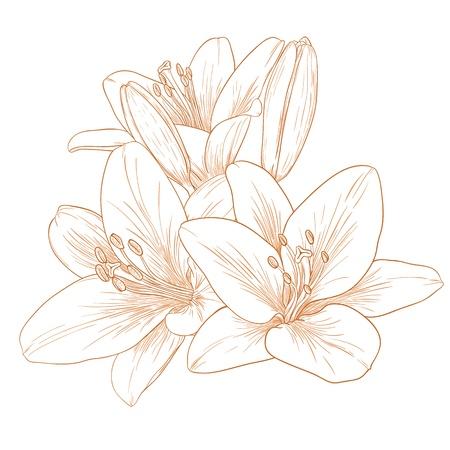Vector lilies flowers in vintage engraving style.