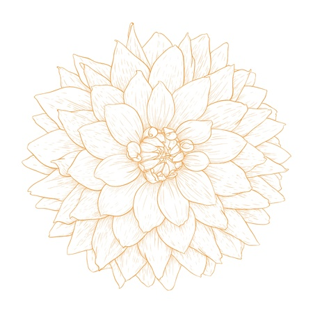 dahlia flower isolated on white background  Vector