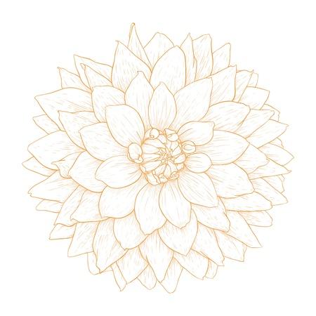 dalia flores aisladas sobre fondo blanco