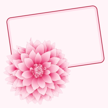 chrysanthemums: illustration greeting card with pink dahlia