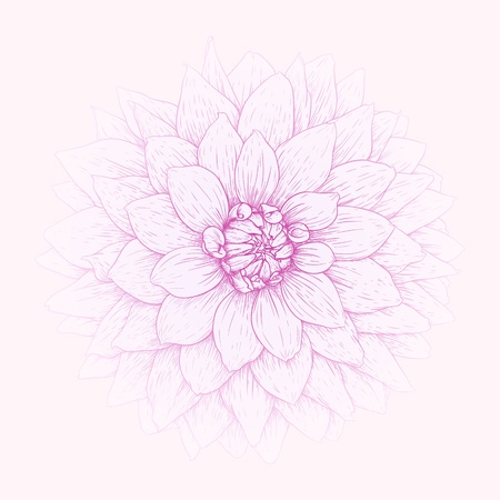 Vector illustration greeting card with dahlia flower. Stock Vector - 16003785