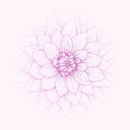 Vector tarjeta de felicitación con ilustración dahlia flor. Ilustración de vector