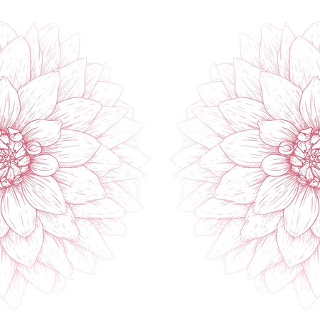 Vector dahlia flower isolated on white background.