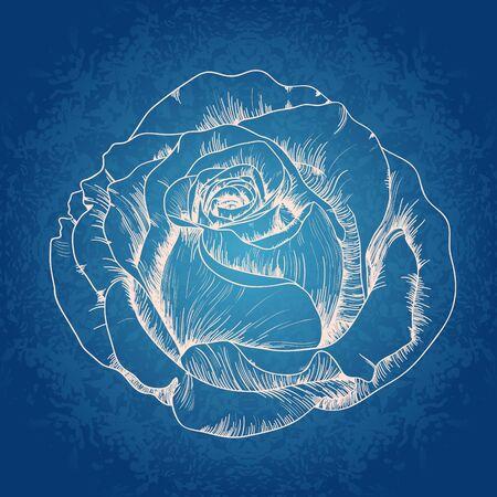 Vector illustratie met roos op blauwe achtergrond.