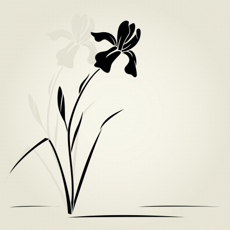iris flower: Vector illustration with iris for greeting card