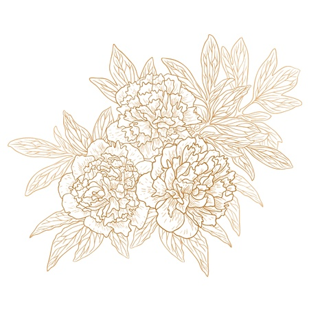 Vector set of peonies in vintage engraving style.