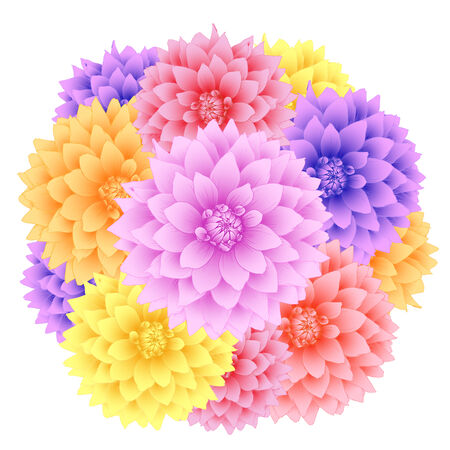 Vector dahlia flowers isolated on white background. Vector