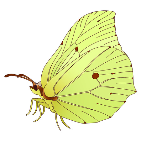 butterfly isolated: colorful realistic butterfly isolated on white. Illustration