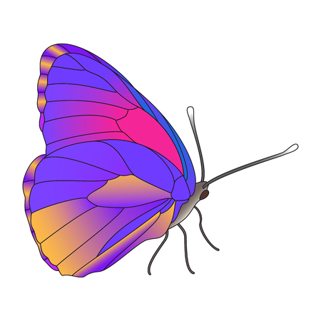 colorful realistic butterfly isolated on white. Illustration