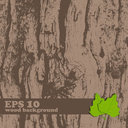 tree bark: Vector grunge vintage wooden texture with place for text  Illustration