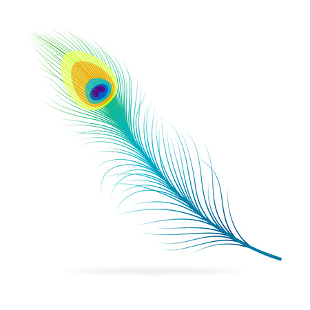 Vector isolated peacock feather on white background.