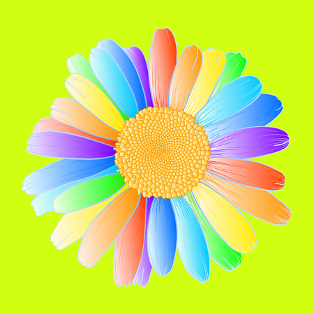 Vector daisy flower with rainbow petals on yellow-green background.