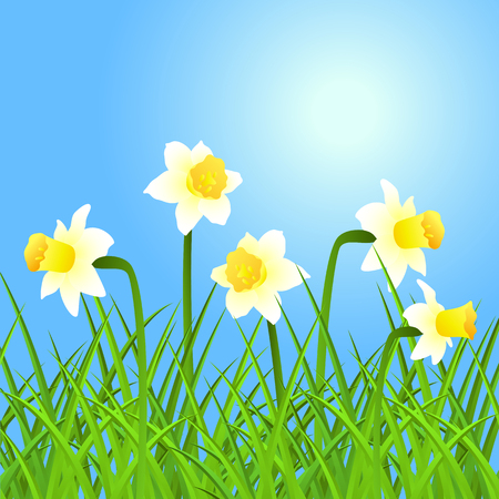 narcissus: spring background with narcissus and grass.