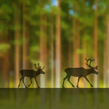 lapland: blurred forest background with two deers.