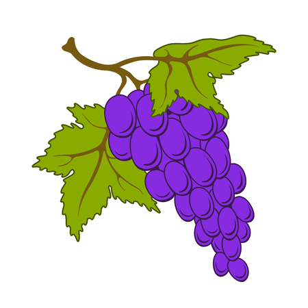 grapes bunch isolated on white background.