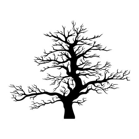 tree isolated: Vector black tree silhouette isolated on white background.
