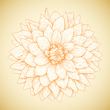 Vector dahlia flower in vintage engraving style.