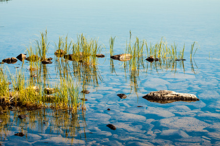 Reflection tufts of aquatic grass plants in the lake. Natural background. Stock Photo