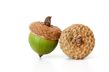 Two green acorns isolated on a white background.