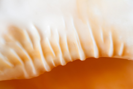 Sea shell natural background. Shallow depth of field.