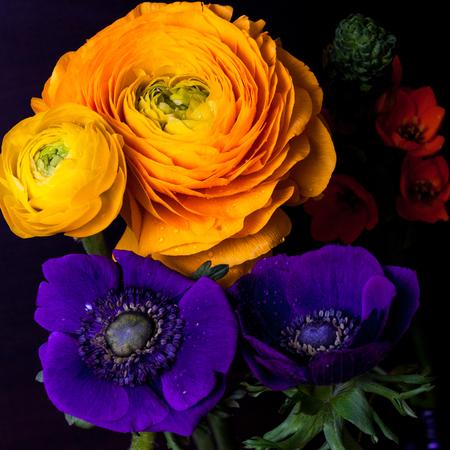 Bouquet of orange ornithogalum, ranunculus, anemone flowers on dark background.