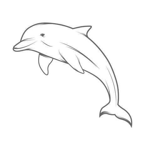 Dolphin creative vector illustration in line-art style