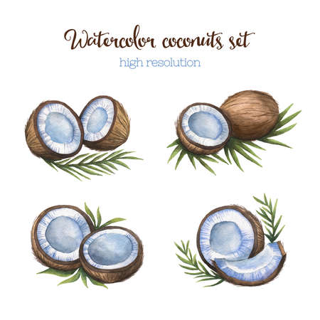 coconuts: Watercolor coconuts set in high resolution. Isolated on white background. Stock Photo