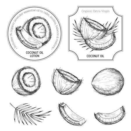 손 코코넛 세트를 그려. 빈티지 라벨, 배지, 우표입니다. 레트로 스케치 스타일 벡터 열대 음식 그림.