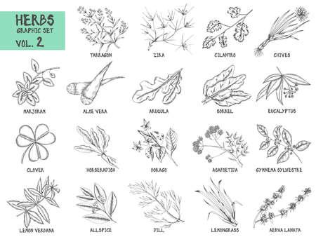 Hand gezeichnet Vektor-Reihe von Kräutern und Gewürzen vintage Abbildungen. Küche und Drogenpflanzen Sammlung. Vektorgrafik