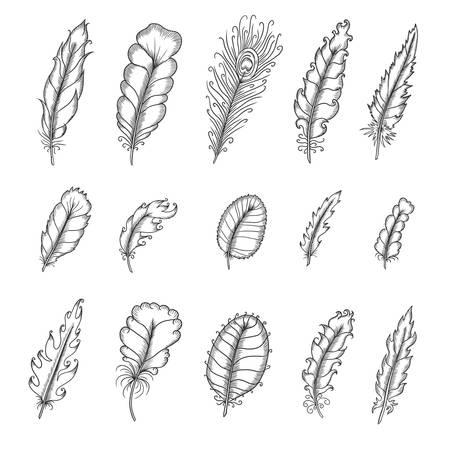 pluma: Dibujado a mano plumas conjunto vendimia. Pen ilustraci�n vectorial gr�fico. Cute elementos de dise�o de moda para la decoraci�n. Partes del atrapasue�os. Monocromo dibujo aislado sobre fondo blanco.