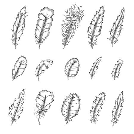 indian feather: Hand drawn vintage feathers set. Pen graphic vector illustration. Cute trendy design elements for decoration. Parts of dream catchers. Monochrome drawing isolated on white background.