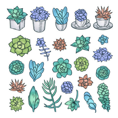 decor graphic: Hand drawn vector set of succulents. Pen graphic vintage illustration. Cute trendy design elements for decor needs. Illustration